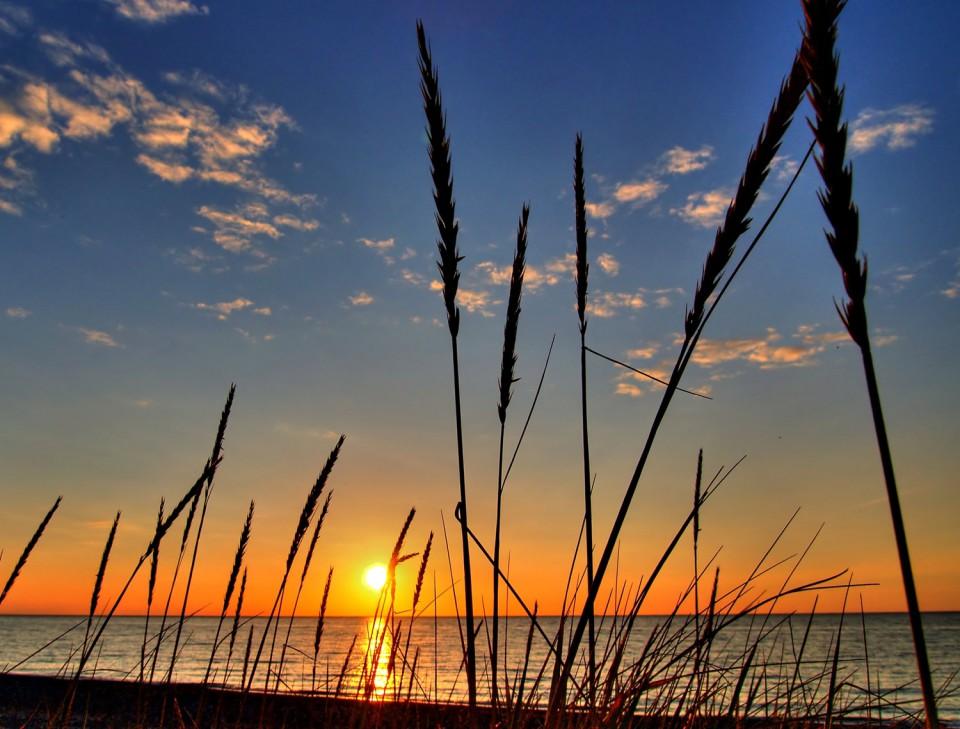 field-dusk-960×729