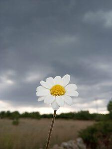 Flor que refleja la soledad, entrada del blog escúchate psicólogos Madrid
